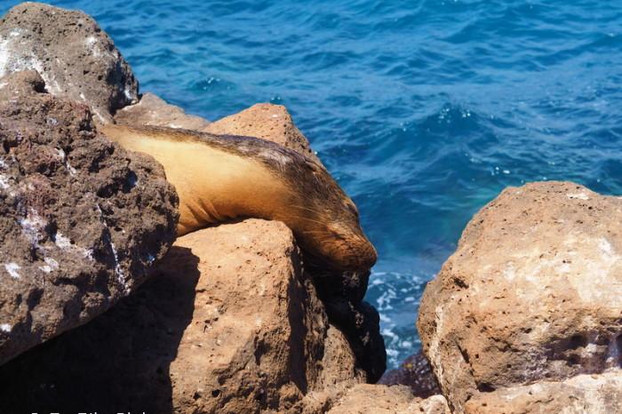 OLYMPUS DIGITAL CAMERA - Sea lion, North Seymour Island