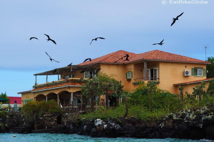 Galapagos - Frigate birds circling a house, Puerto Ayora, Santa Cruz Island