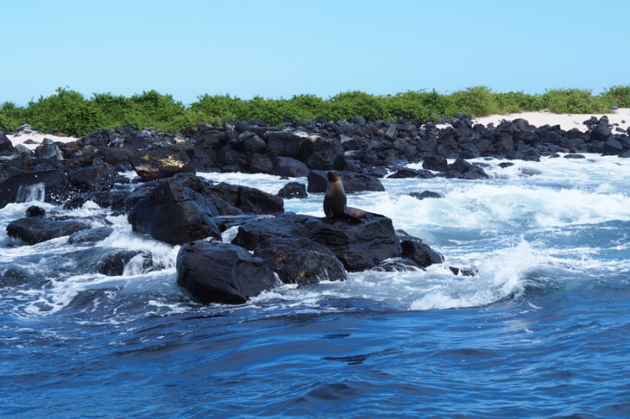 Galapagos - Visit to La Lobería for snorkelling with the sea lions - but the sea was too rough!