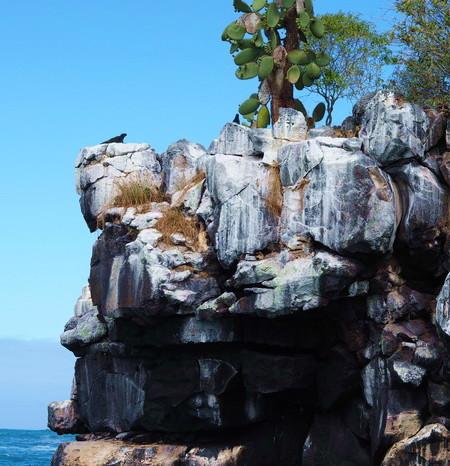 Galapagos - Marine iguana, Santa Cruz Island