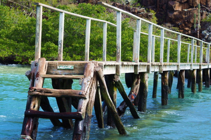 Galapagos - Wooden jetty with Galapagos red rock crabs, Santa Cruz Island
