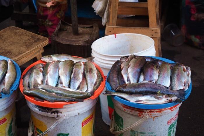 Peru - Fish, Huancayo market