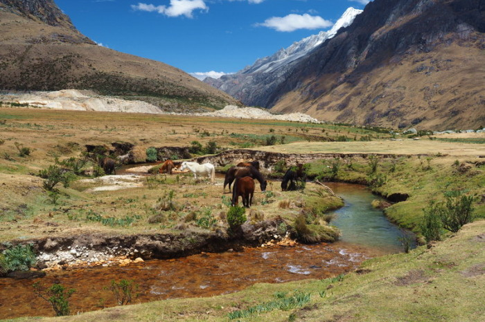 Santa Cruz Trek - The official campsite 2 hours from Punta Union was home to an array of horses and cows