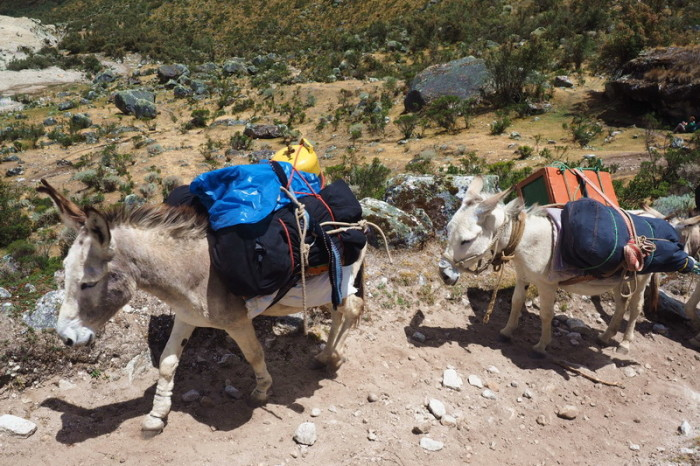 Santa Cruz Trek - We stopped to watch these heavily laden donkeys make their way up the path