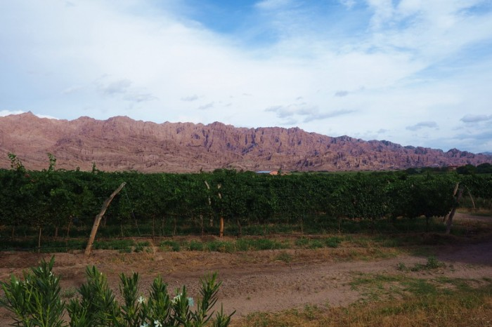 Argentina - Vineyards along Ruta 40 on the way to Cafayate