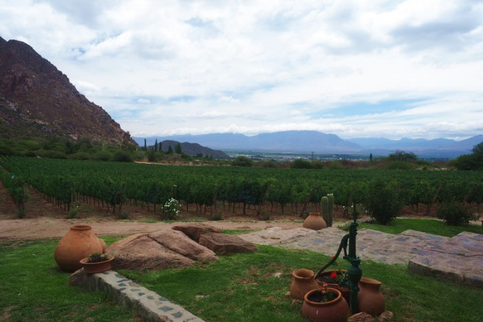 Argentina - View from our first winery - Bodega Domingo Molina, Cafayate