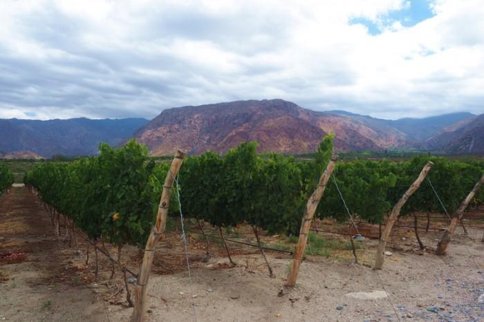 Argentina - Piattelli Winery, Cafayate