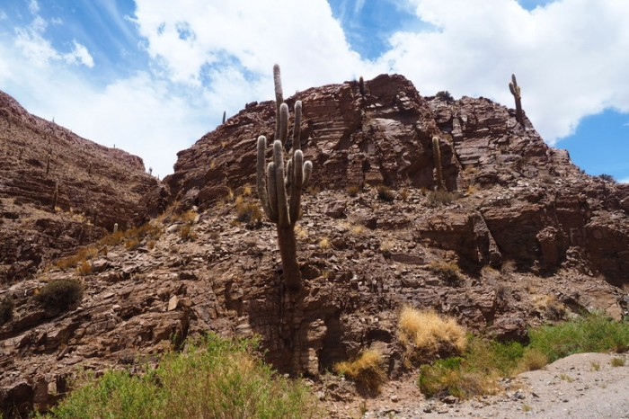 Argentina - Beautiful desert scenery in the canyon lands
