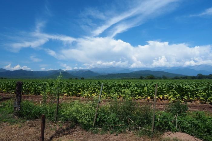 Argentina - Green fields near El Carmen
