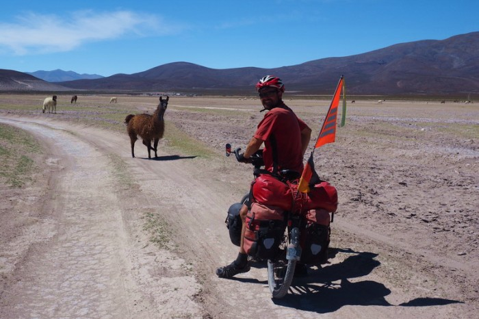 Bolivia - We met lots of llamas on our way to the Salar de Coipasa