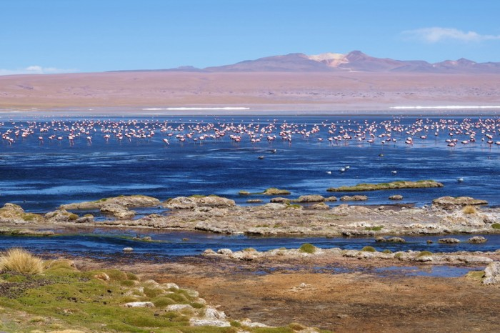 Bolivia - Day 5 of the Laguna Route: Laguna Colorado and flamingos