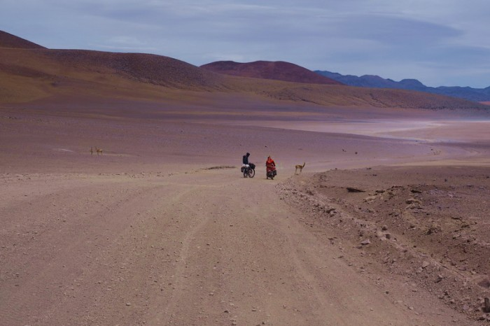 Bolivia - Day 7 of the Laguna Route: Vicunas on the way to Lagunas Verde and Blanca