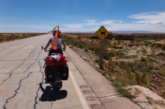 Bolivia - Llamas ahead!
