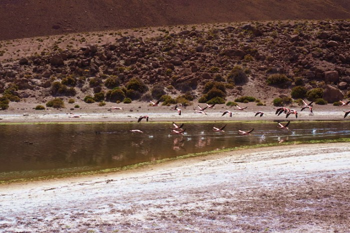 Chile - Flamingos on the way to Machuca