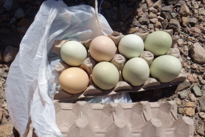 Chile - Boiled eggs - fuel for cyclists!