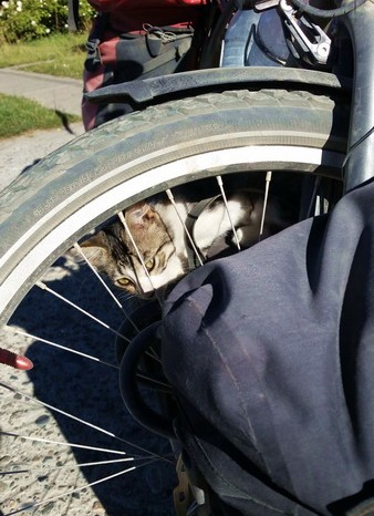 Chile - This little kitten was fascinated by our panniers!