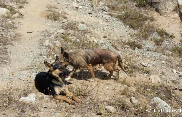 Chile - Our trail dogs!