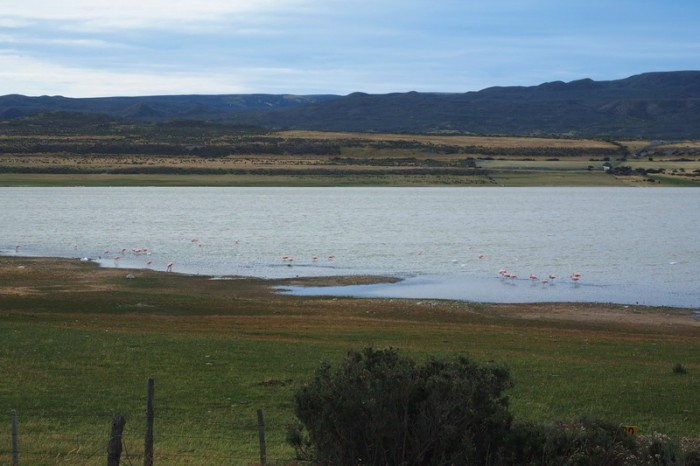 Chile - There were pink flamingos in these lakes
