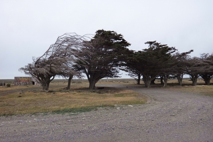 Chile - Wind swept trees on our way to the border and San Sebastian